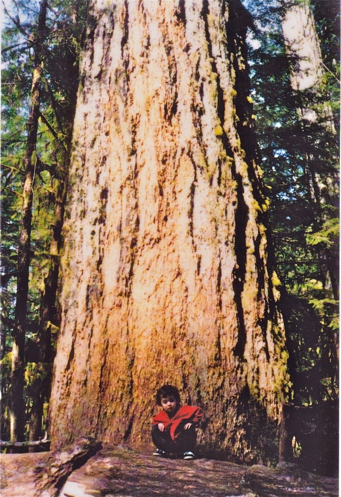 Gabriel at Cathedral Grove, Vancouver Island: Where the big trees live.